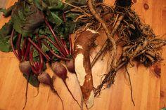 Harvesting Burdock