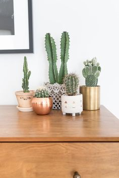 Beautiful cacti and succulent display, with unique copper, gold and ceramic planters. Great to bring a bit of greenery into a corner of your home!