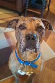 Adopt Ava on | Adoptions | Pinterest | Dog search, German shepherd ...