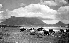 Cape Town in the Old Days! - Cape Town is Awesome Big Bay, Cape Town South Africa, The Old Days, Most Beautiful Cities, Belleza Natural, African History, Vintage Travel Posters, Africa Travel, Live