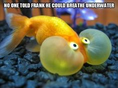 20 Funny Animal Humour Pictures #jokes