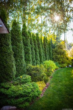 Amazing Evergreen Landscape Ideas For Front Yard Garden - Modern Evergreen Landscape, Landscape Borders, Landscape Designs, Evergreen Trees, House Landscape, Landscape Timbers, Landscape Plans, Large Backyard Landscaping, Privacy Landscaping