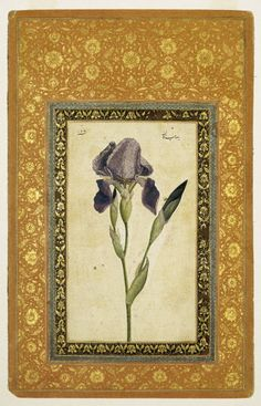 Blue Iris Attributed To: Muhammad Zaman, Persian, active 1649-1704 Medium: Ink, opaque watercolor on paper; gilded borders Place Made: Isfahan, Iran Dates: A.H. 1074-1075/1663-1664 C.E. Dynasty: Safavid Period: Safavid