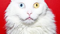 CATS ARE MORE THAN EYE CANDY