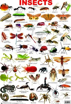 Insects are eaten by many people in Thailand as a snack. Insects are eaten fried, baked, and raw. Many Thai people enjoy eating insects that sometimes that they eat insects as a whole meal with rice. Some of the insects that are eaten are big as well. English Tips, English Study, English Class, English Lessons, Grammar And Vocabulary, English Vocabulary, English Grammar, English Language Learning, Teaching English