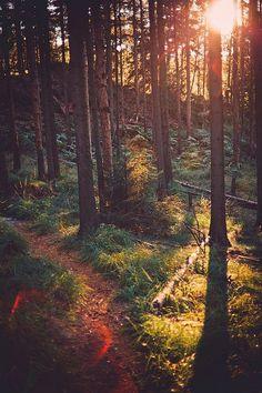 Nature of Latvia