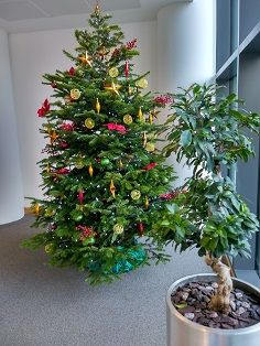 Christmas Tree decorated in 'Harlequin' style by Nature at Work