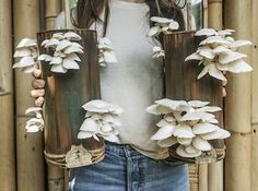 Mushroom Cultivation, Abundance, Ladder Decor, Stuffed Mushrooms, Workshop, Permaculture, Plants, Instagram, Life