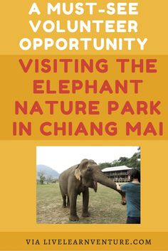 The Elephant Nature Park in Chiang Mai! #Thailand #Asia #travel #elephants #travelblogger #volunteer