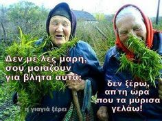I am a little old lady, and would love to live in a state that would let me hThis will be me smoke or eat weed,without being illegal when I'm a little old lady. Funny Fails, Funny Jokes, Hilarious, Weed Jokes, Teacher Jokes, Humor Grafico, Smoking Weed, Live News, Cannabis