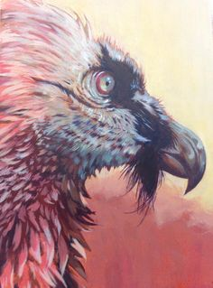 Bearded Vulture in Acrylic