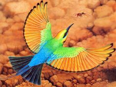 The Rainbow Bee-eater (Merops ornatus) is a near passerine bird in the bee- eater family Meropidae. It is the only species of Meropidae found in Australia. Pretty Birds, Beautiful Birds, Animals Beautiful, Cute Animals, Wild Animals, Exotic Birds, Colorful Birds, Bee Eater, Australian Birds