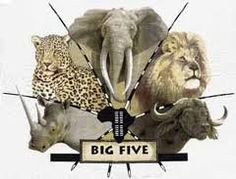 The BIG 5 ~ The phrase Big Five game was coined by big-game hunters and refers to the five most difficult animals in Africa to hunt on foot. The term is still used in most tourist and wildlife guides that discuss African wildlife safaris. Wildlife Safari, Big 5, The Beautiful Country, Big Game, Pyrography, Hobbies And Crafts, African Art, South Africa, Beautiful Pictures