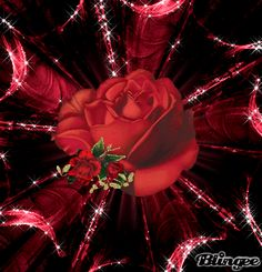 Gif animate - New Intimamente & Vip players Flowers Gif, Beautiful Rose Flowers, Beautiful Gif, Happy Valentines Day Pictures, Valentine Day Love, Heart Pictures, Angel Pictures, Gif Greetings, Coeur Gif
