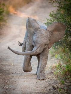 50 Adorable Baby Animals Will Surely Make Your Day Brighter - Elefant - Baby Animals Pictures, Cute Animal Pictures, Animals And Pets, Funny Animals, Wild Animals, Baby Zoo Animals, Crazy Animals, Photo Elephant, Cute Baby Elephant