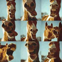 Horse selfies!