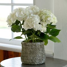 Classic Hydrangea <3 beautiful <3 #terrainflowermarket