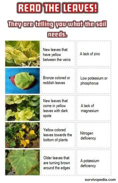 Gardening: How To Naturally Improve Your Soil When the leaves are changing their appearance, the soil is the problem!When the leaves are changing their appearance, the soil is the problem! Hydroponic Farming, Hydroponic Growing, Aquaponics System, Aquaponics Greenhouse, Greenhouse Growing, Aquaponics Fish, Organic Vegetables, Growing Vegetables, Diy Hydroponik