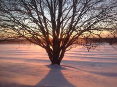Cold Fusion, Winter Scenery, Celestial, Sunset, Outdoor, Outdoors, Sunsets, Outdoor Games, The Great Outdoors