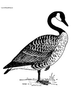 geese flying south coloring pages - photo#37