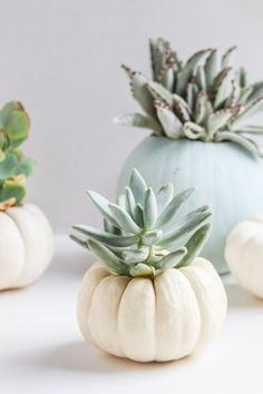 Give mini pumpkins a little more life by turning them into an indoor succulent garden. Try this tutorial for DIY mini pumpkin planters this fall season and. Mini Pumpkins, White Pumpkins, Fall Home Decor, Autumn Home, Thanksgiving Decorations, Halloween Decorations, Aisle Decorations, Pumpkin Planter, Green Pumpkin