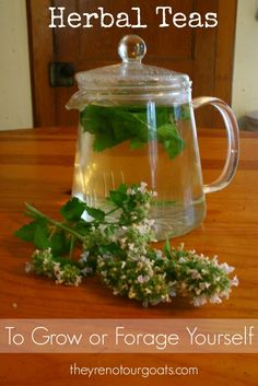 Why buy expensive herbal teas when you can grow or gather them for free?