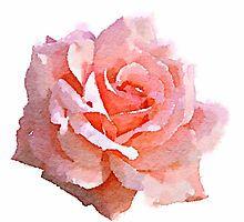 Light Pink Rose Watercolor by Rachelyouens