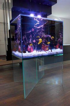 Floating Aquarium Wall Aquarium, Cichlid Aquarium, Glass Aquarium, Home Aquarium, Aquarium Design, Marine Aquarium, Henley Homes, Aquarium Architecture, Freshwater Aquarium Plants