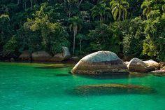 Rainforest :)