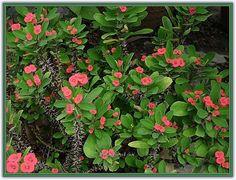 Zehirli Çiçekler - Sayfa 4 - Forum Gerçek