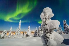 The Northern Lights season has started in Rovaniemi, Lapland, Finland. Hunting the Aurora Borealis is more than a hobby to Alex Kuznetsov. Northern Lights Trips, See The Northern Lights, Photography Tours, Light Photography, Solar Activity, Snow Covered Trees, Midnight Sun, Natural Phenomena, Best Location