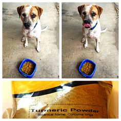 Why you should feed your dog Turmeric (great for itches & allergies)