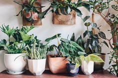 Just love them all. Tropicals, Succulents, Staghorns, you name it.
