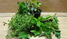 Jak si připravit marinády na grilování | recepty Korn, Parsley, Pesto, Barbecue, Grilling, Herbs, Plants, Treats, Sweet Like Candy