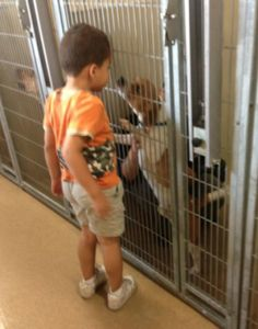 Social Media Attempts To Save Man's Best Friend From Euthanasia