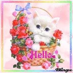 Hello pictures and quotes Cute Baby Animals, Animals And Pets, Hello Pictures, Bisous Gif, Kitten Images, Image Chat, Glitter Graphics, Cat Gif, I Love Cats