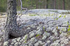 Rokua national park, Finland. Rokua Health & Spa Hotel. Finnish nature.