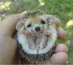Cuter than cute!
