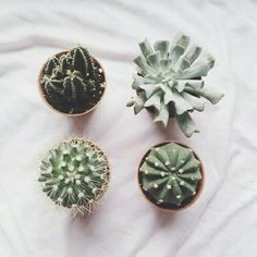Cactus and succulents Kinds Of Cactus, Small Cactus, Cacti And Succulents, Planting Succulents, Planting Flowers, Belle Plante, Amazing Greens, Plant Aesthetic, Plants Are Friends