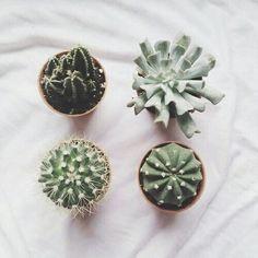 Quad of cacti