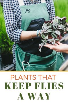 How do you get rid of flies in your house? Or are you looking for a fly repellent that will work indoor or outdoor? Keeping flies away is easy when you plant the right things. Here are the best plants for helping you get rid of flies in your house or outside in an all natural way! #fly #flies #bugrepellent Keep Flies Away, Get Rid Of Flies, Big Plants, Cool Plants, Flies Repellent Outdoor, Gardening For Beginners, Gardening Tips, Diy Projects On A Budget, Fly Repellant