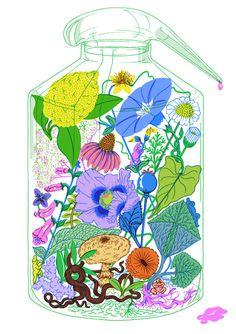 Sister Arrow   Bottled Botanic Gardens  inspiration