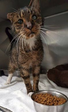 15-year-old Scraggly Shelter Cat Found Humans He'd Been Waiting for All His Life...