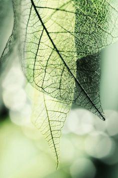 euph0r14:  macro | Spring fantasy | by vnandrianova | http://500px.com/photo/104644725