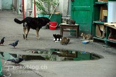 backyard scene - cats and a dog