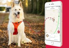 If you love your dog and would panic if he ever disappeared, then you need a GPS dog Tracker. Check out our top 3 reasons on why to buy a dog tracker! Buy A Dog, Your Dog, Love You, Dogs, Check, Stuff To Buy, Te Amo, Je T'aime, Pet Dogs