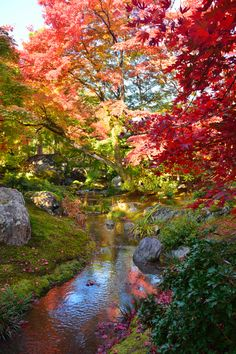 Fall in Garden of Hogonin Temple, Kyoto, Japan
