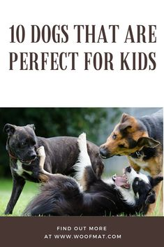 Dogs are great pets for kids: they  do not just become their best friends, but also teach unconditional love, cooperation and responsibility.  According to numerous studies, those kids who grow up with pets and particularly with dogs are more physically and psychologically healthy.  By having a four-legged friends children learn how to be more kind, caring, social and open-minded.