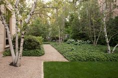Garden With Ground Cover And Birch Trees : Enchanting Beauty Birch Trees In Your Garden
