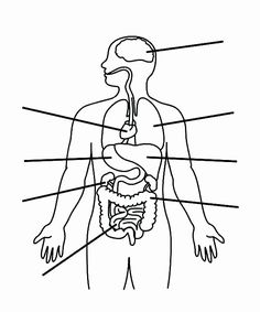 Outline Of A Human Body The Locations Of The Sensor Units On The Body The Outline Of The. Outline Of A Human Body Human Body Outline Royalty Free Vector Image Vectorstock. Outline Of A Human Body Human Body Outline In… Continue Reading → Human Body Organs, Human Body Unit, Human Body Systems, Anatomy Organs, Human Body Anatomy, Anatomy Coloring Book, Coloring Books, Alphabet Coloring, Human Body Diagram